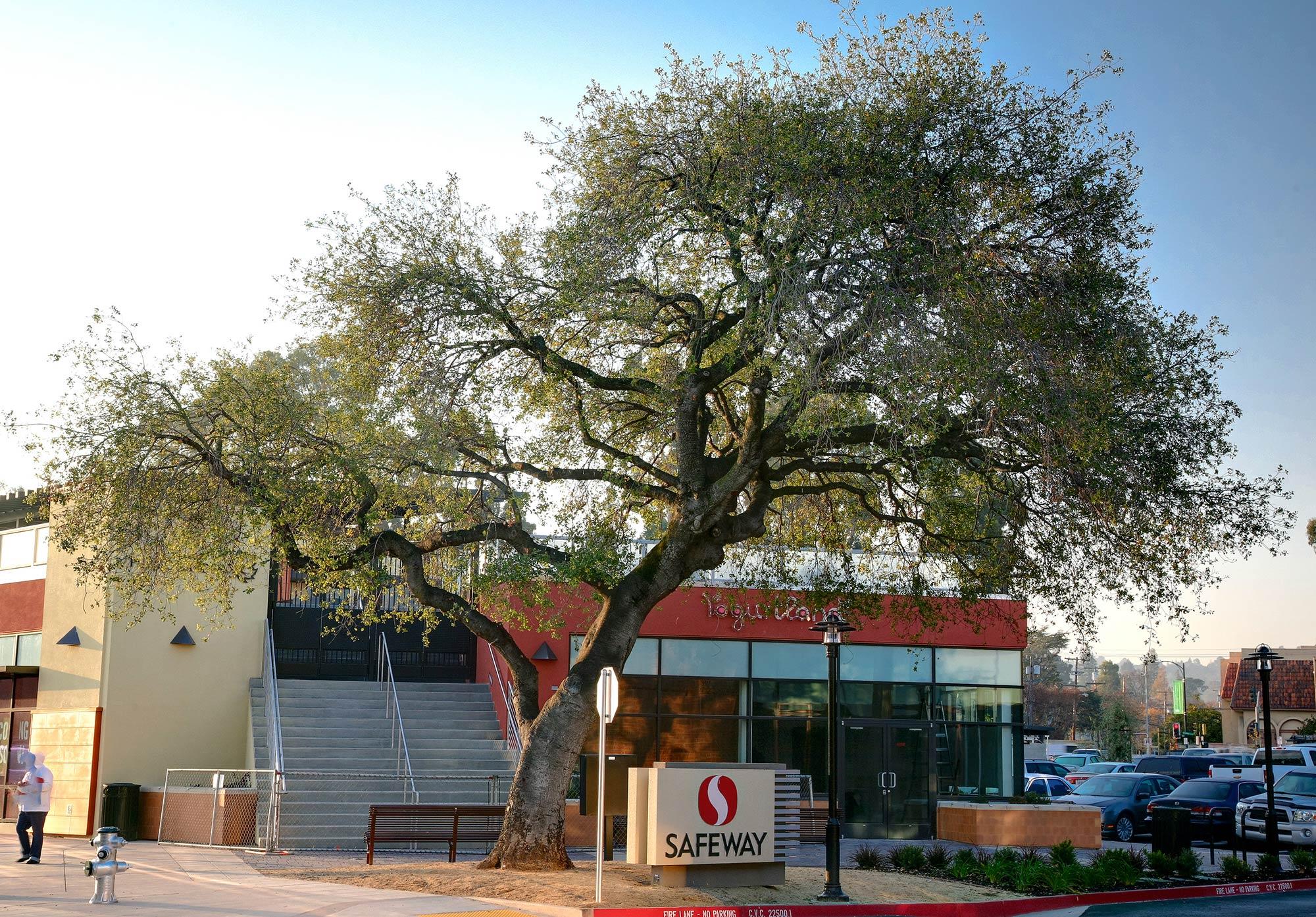 Safeway-Burlingame, CA-Lowney Architecture-1